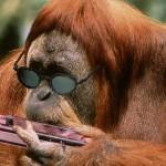 Blues orangutan