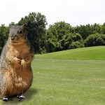 Golf-squirrel