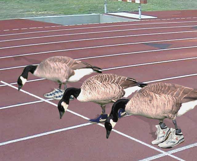 Gooserace