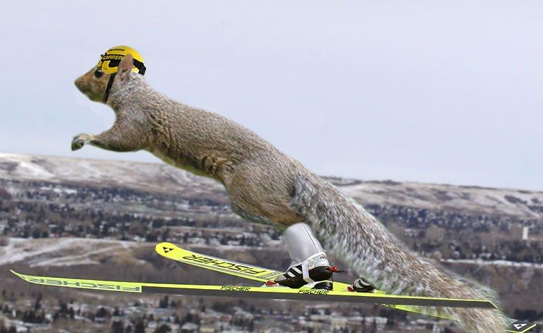 Jump squirrel