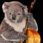 Koala bass