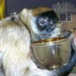 Monkey winner