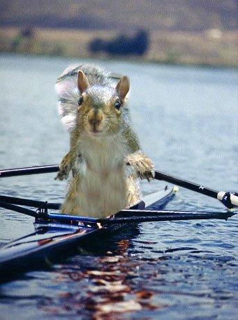 Rowsquirrel