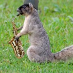 Saxosquirrel