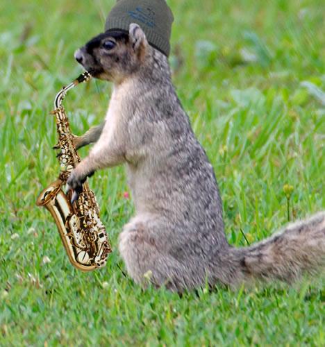 Saxosquirrel