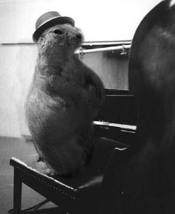 Thelonious Chipmonk