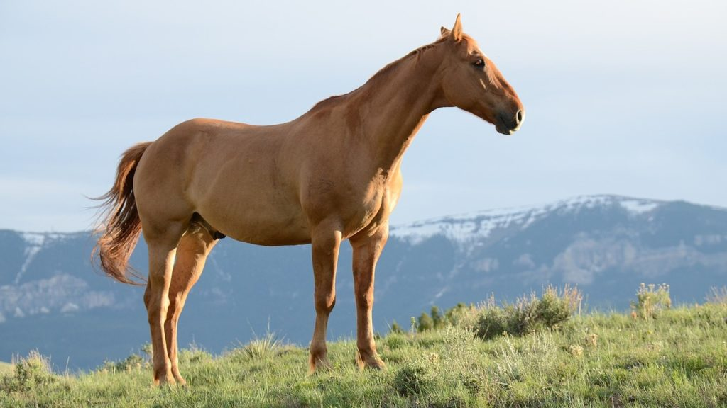 Single horse in a mountain field
